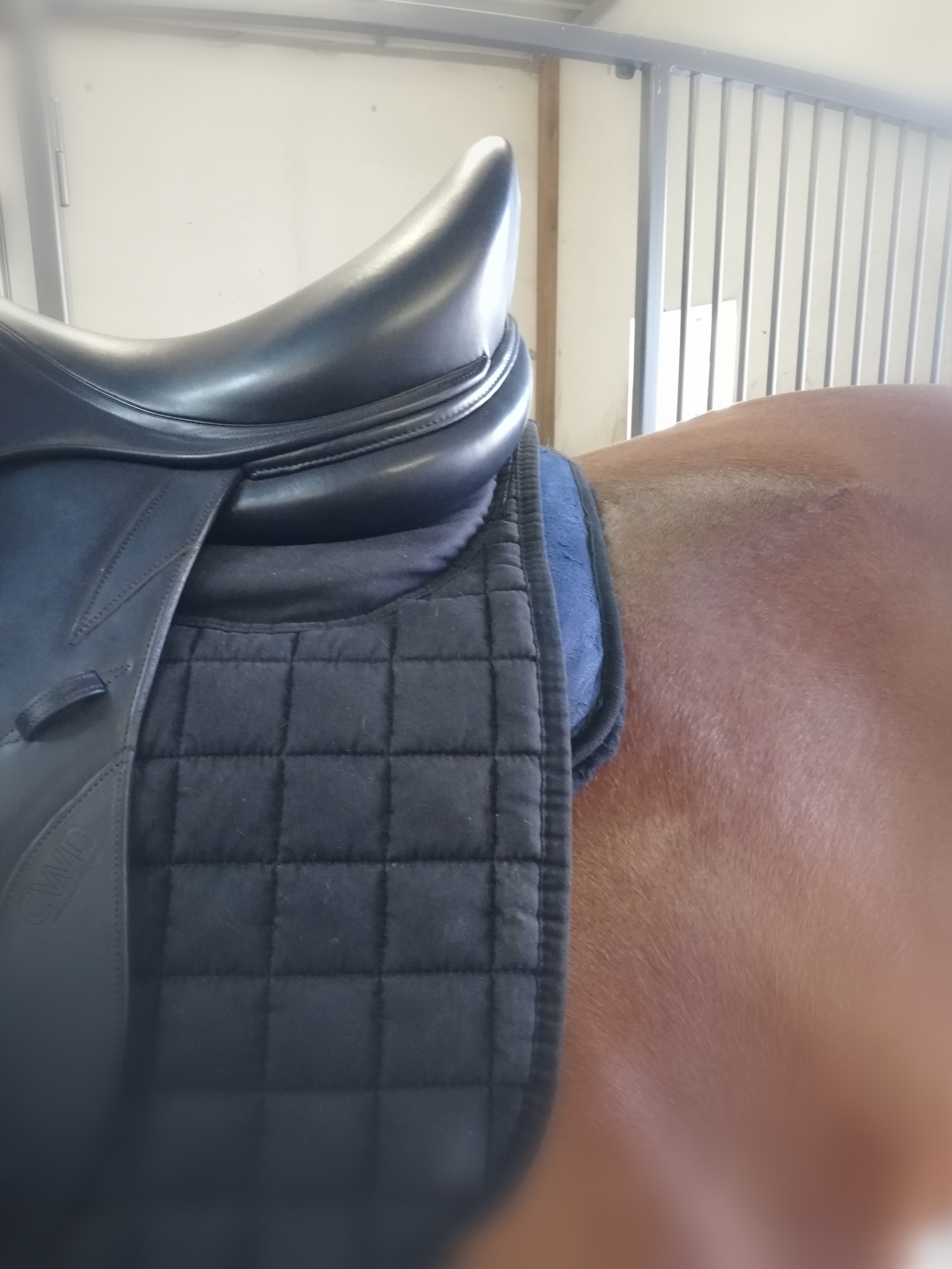 Dressur Lammfell-Pad cavalo equino Edition